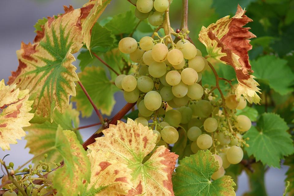Cose da fare a Frosinone, un assaggio delle ciambelline al vino